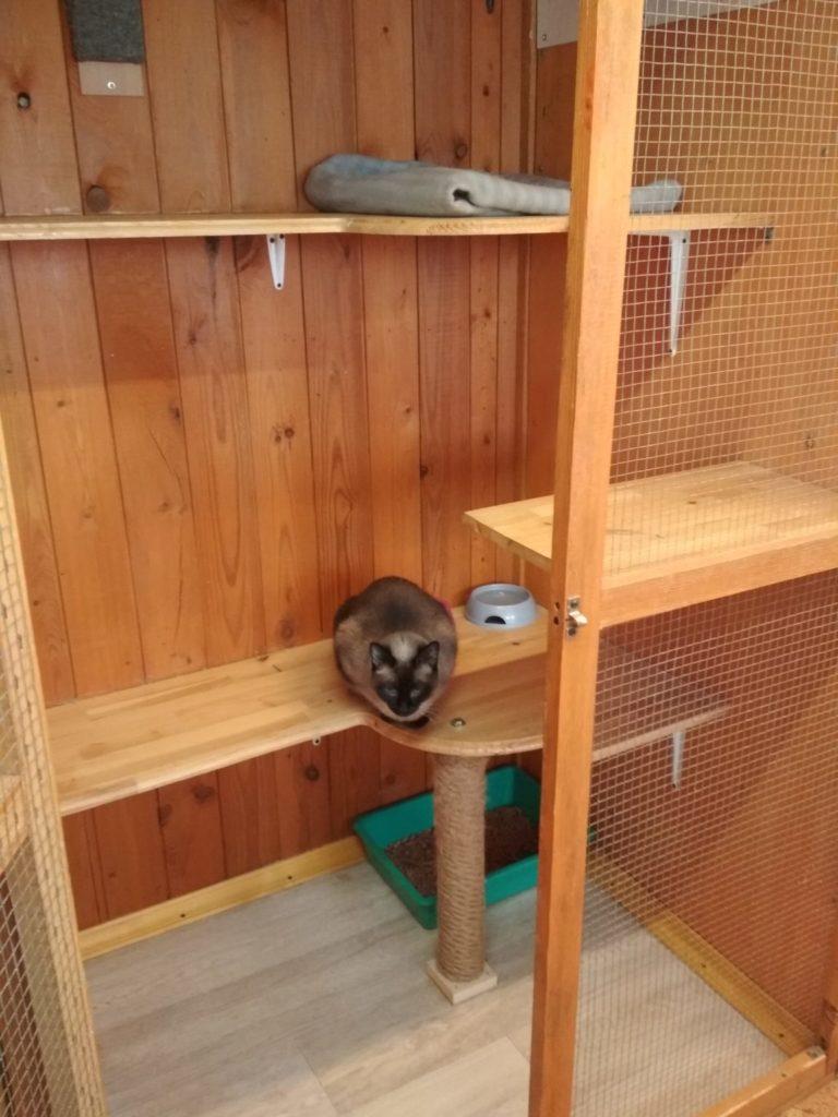 Зоогостиница Тори Номер для кошки Стандарт 2