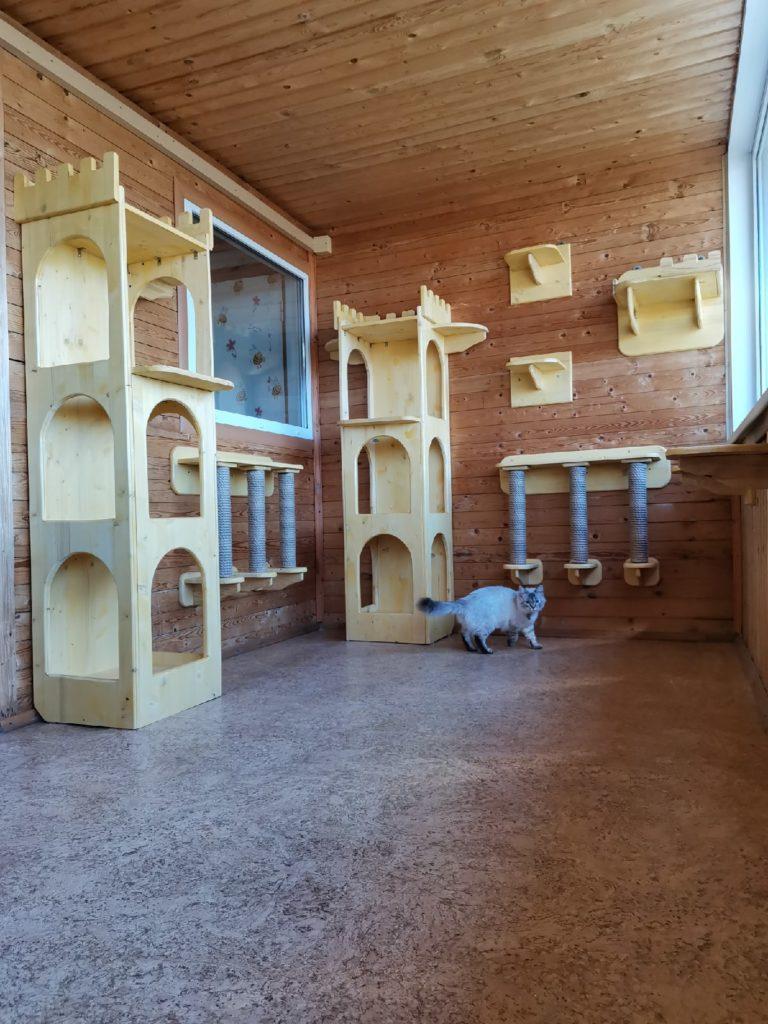 Зоогостиница Тори Игровая комната для кошек