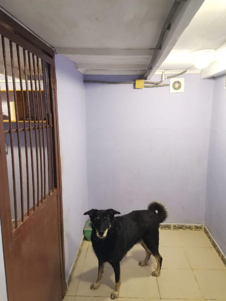 Зоогостиница Тори Вольер для собаки Комфорт 2