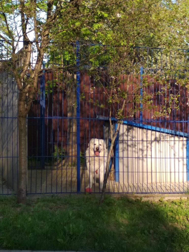 Зоогостиница Тори Уличный вольер для собак