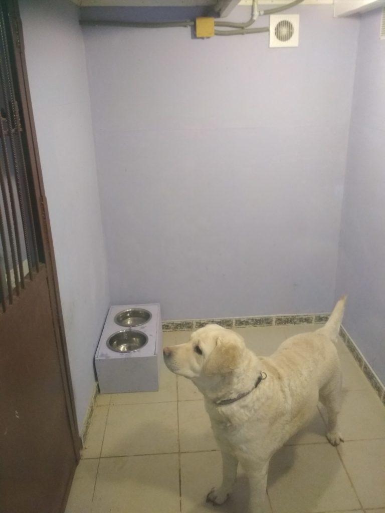 Зоогостиница Тори Вольер для собак Комфорт