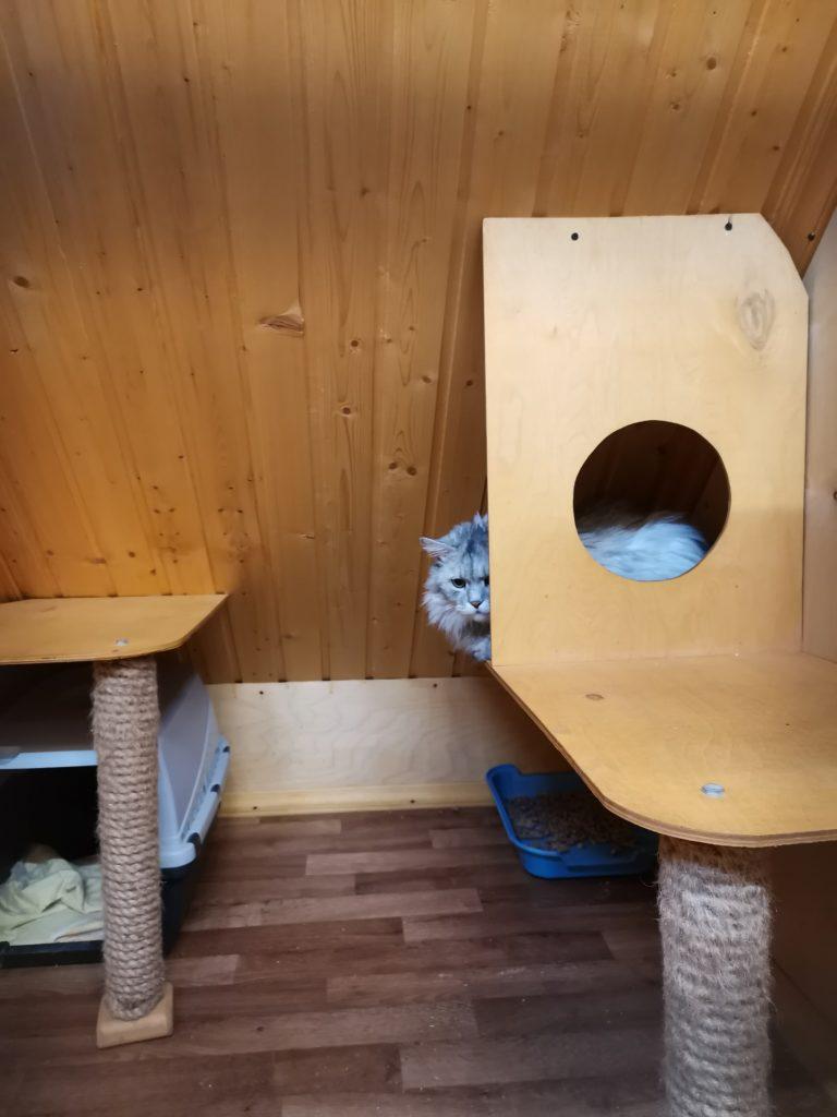 Зоогостиница Тори Номер для кошки Комфорт 2